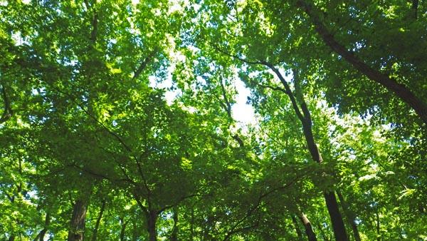 独歩の森 空