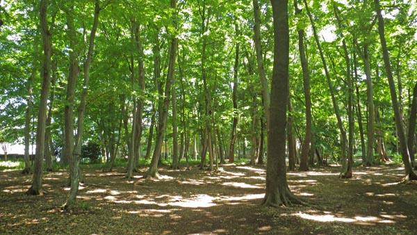 境山野公園:通称独歩の森』