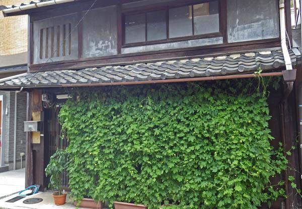 京都で見た緑のカーテン