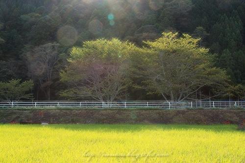 岡部の秋201401
