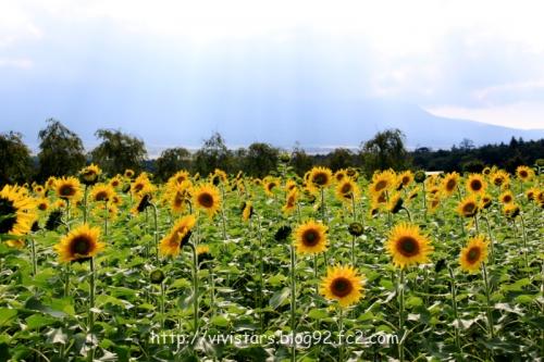 花の都公園004