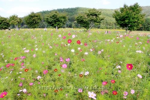 花の都公園002