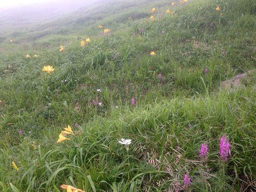 夏のお花畑