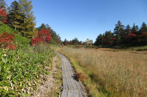湿原の木道