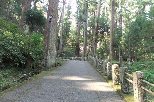 天然記念物の杉林