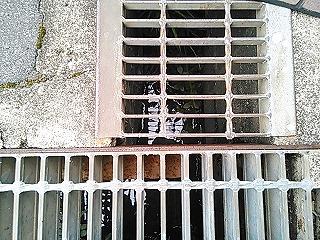 kamisaku524-10.jpg