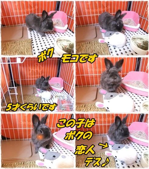 2014_0228愛&モコ0012-tile