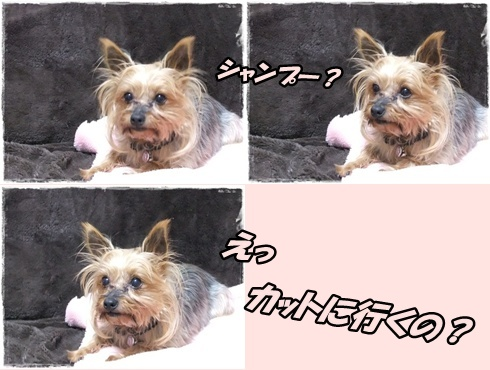 2014_0228愛&モコ0006-tile