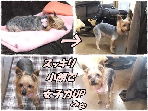 2014_0228愛&モコ0010-tile
