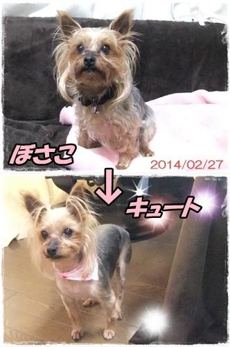 2014_0228愛&モコ0004-vert