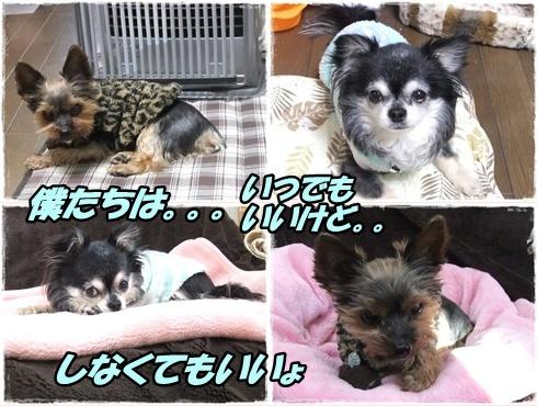 2014_0228愛&モコ0005-tile