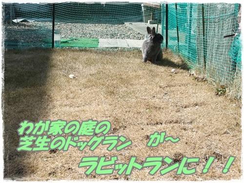 2014_0304モコ0021