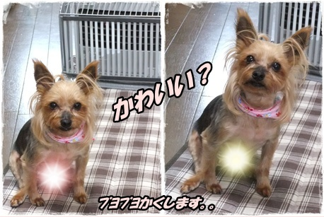 2014_0228愛&モコ0033-tile
