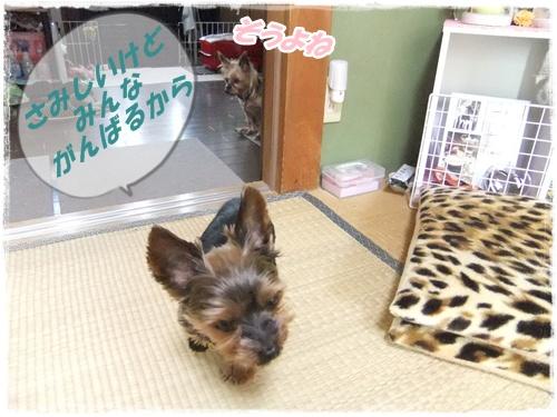 2014_0328ラッキ-迷子クマ0005