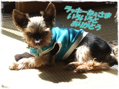 2014_0329ラッキ-初七日0006