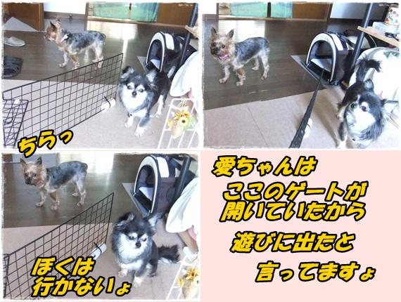 2014_0502愛の逃亡劇0033-tile
