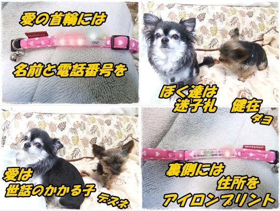 2014_0502愛の逃亡劇0001-tile