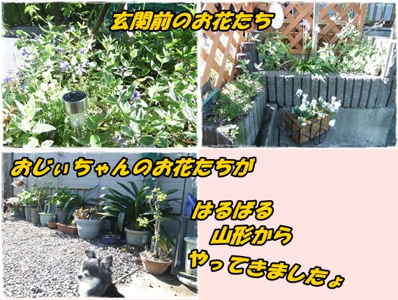 2014_0502愛の逃亡劇0014-tile
