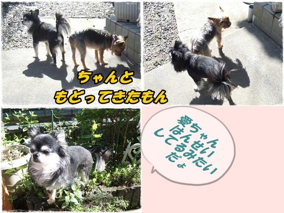 2014_0502愛の逃亡劇0016-tile