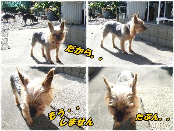2014_0502愛の逃亡劇0018-tile