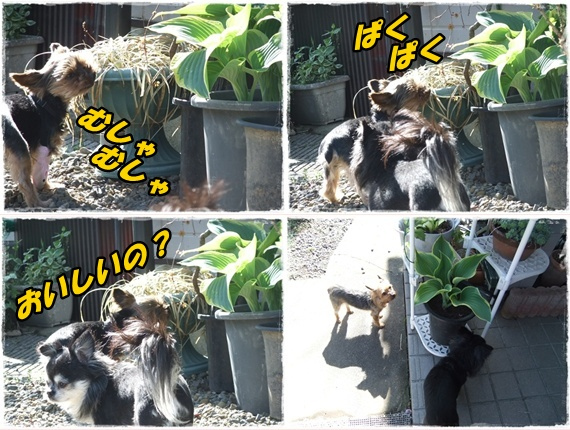 2014_0502愛の逃亡劇0029-tile