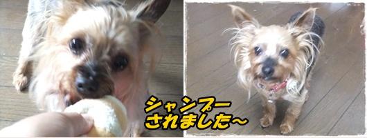 2014_0621久しぶりのワンズ0060-tile