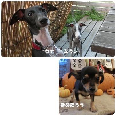 2014-9-108.jpg