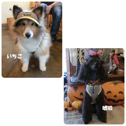 2014-9-137.jpg
