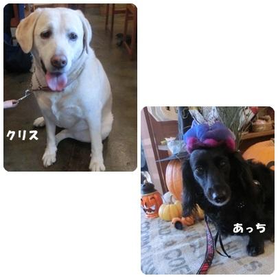 2014-9-138.jpg