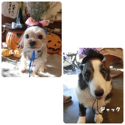 2014-9-151.jpg