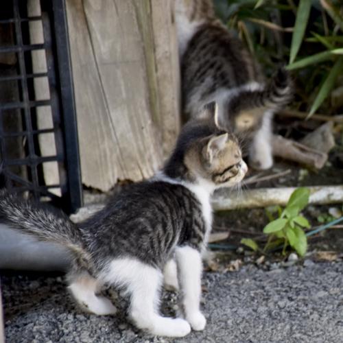 kitty_14_9_11_2.jpg
