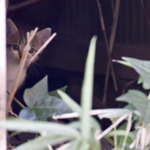 kitty_14_9_11_3.jpg