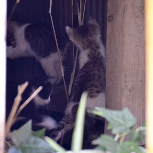 kitty_14_9_11_4.jpg