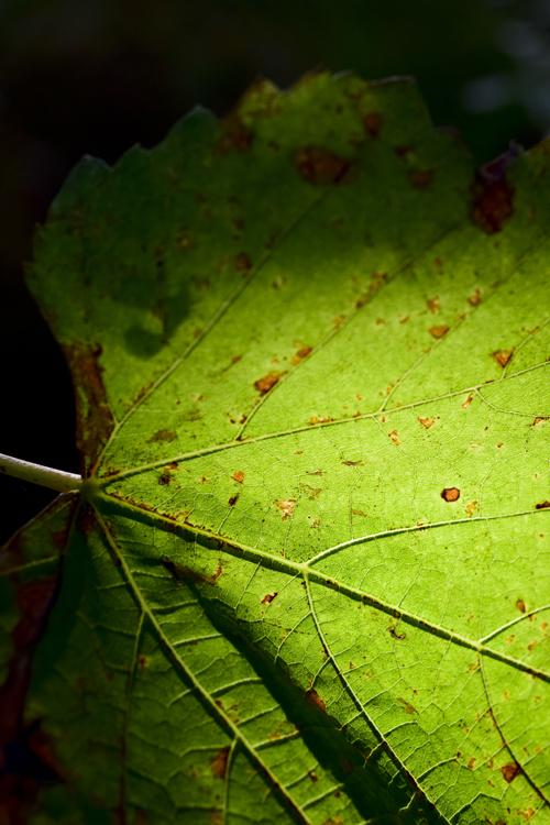 leaf_14_10_16.jpg
