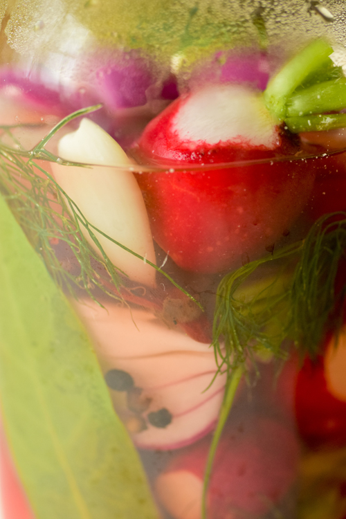 pickles14_6_15_1.jpg