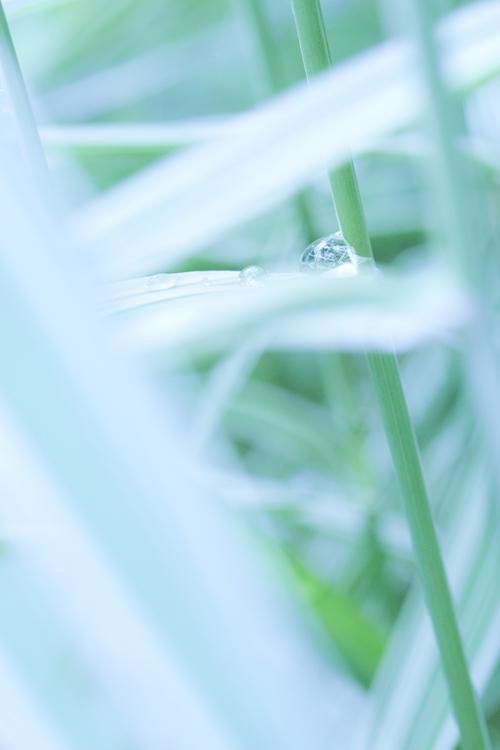shimayoshi_14_6_8_1.jpg