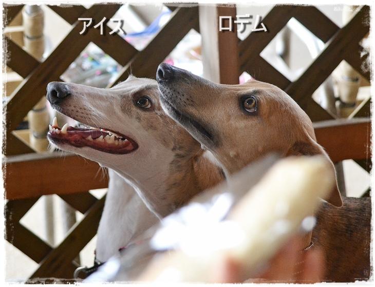 20140329-123.jpg
