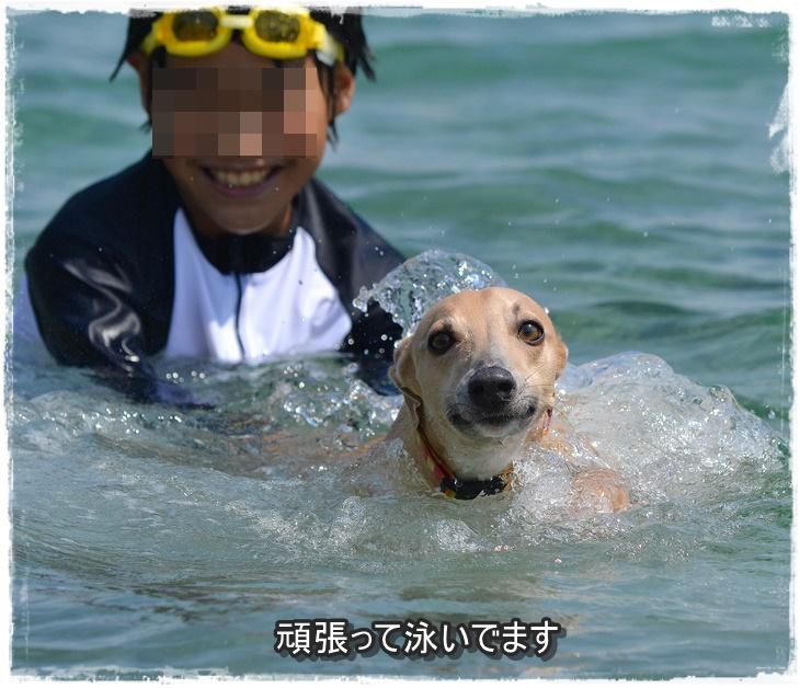20140712-36.jpg