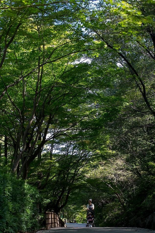 二ヶ月半ぶりの東山は秋っぽかった-2
