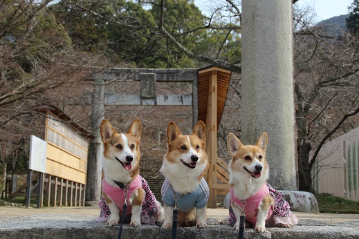 かまど神社 2014-2-16-1