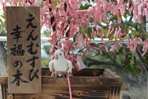 かまど神社 2014-2-16-15
