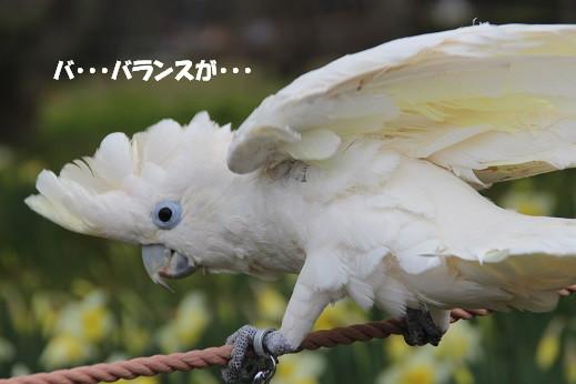 ピノ初海中 2014-3-9-1