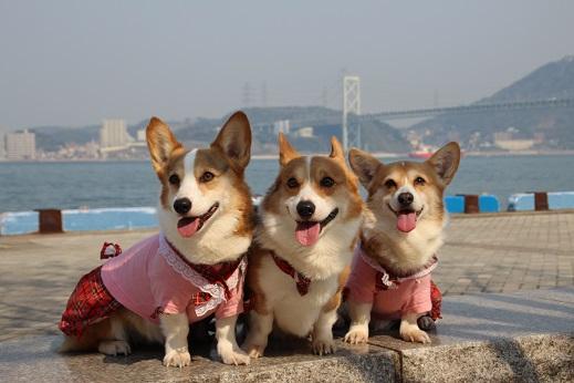 近場のお散歩門司港1 2014ー3-23-7