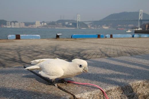 近場のお散歩門司港1 2014-3-23-9