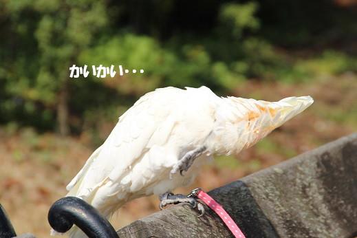 近場のお散歩門司港2 2014-3-23-6