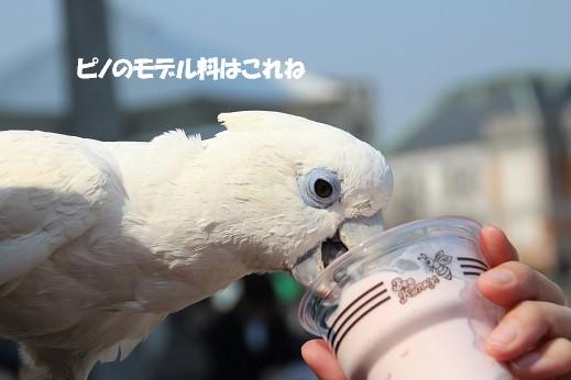 近場のお散歩門司港2 2014-3-23-10