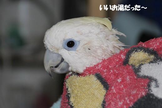 ピノお風呂 2014-3-25-5
