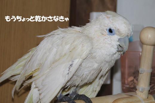 ピノお風呂 2014-3-25-6