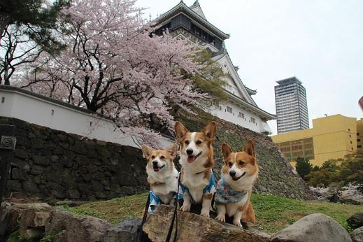 小倉城 2014-3-31-2