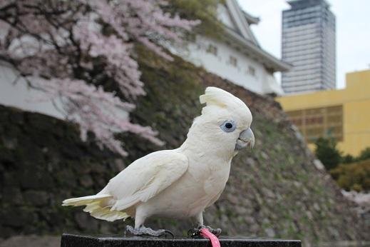 小倉城 2014-3-31-3